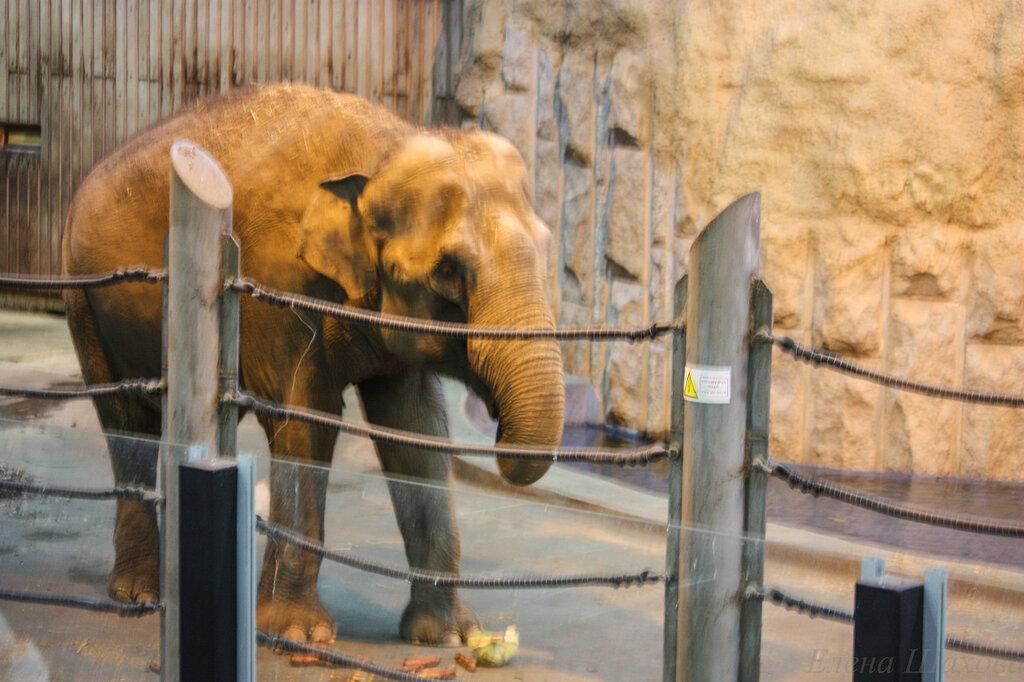 В зоопарке-48.jpg
