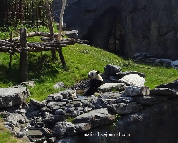 Панда 3