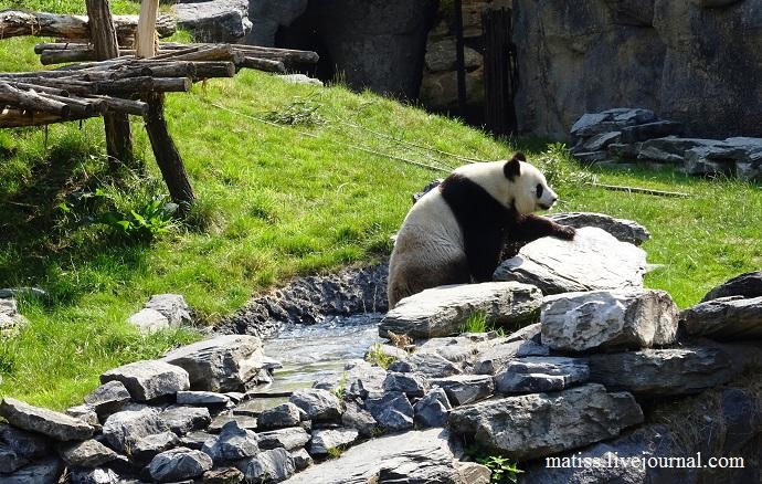 Панда 4