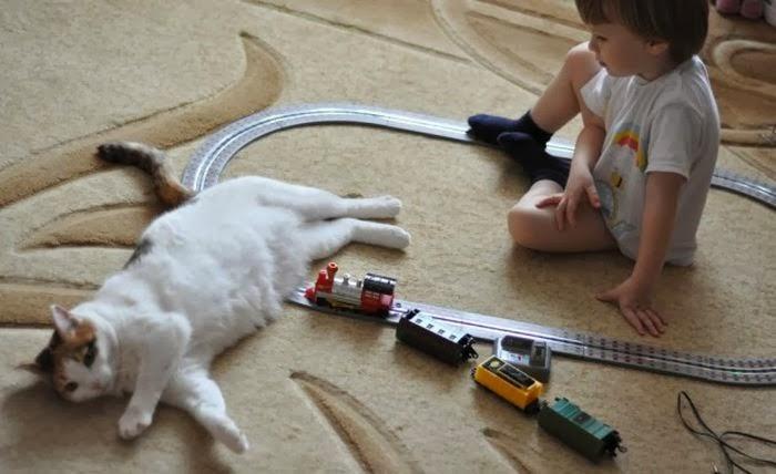 cat-pictures-085-005