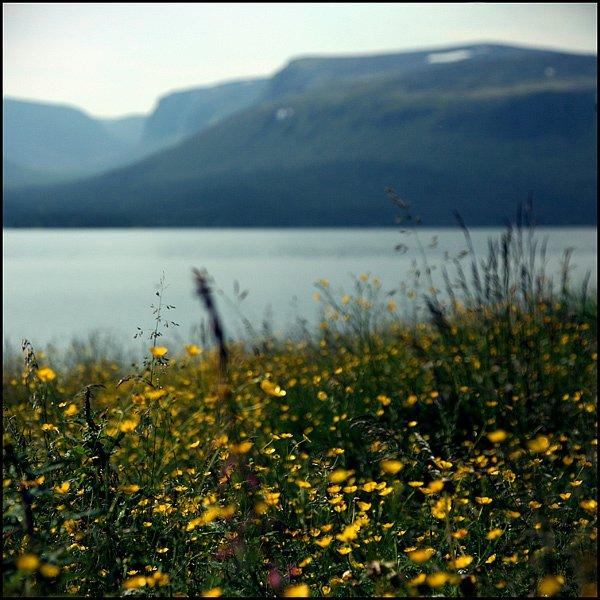 На поляне Саррьлухкинд. Фото Саши Панова