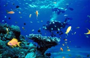 Diving_Eilat