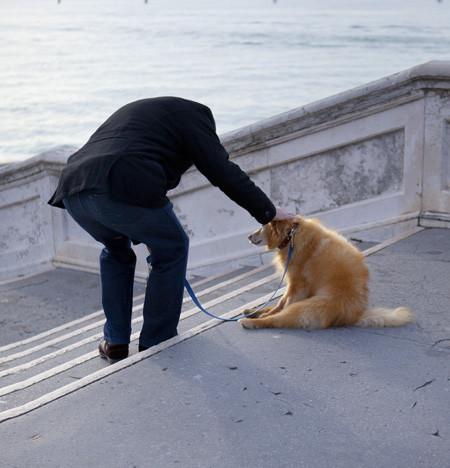 САбачка венеции