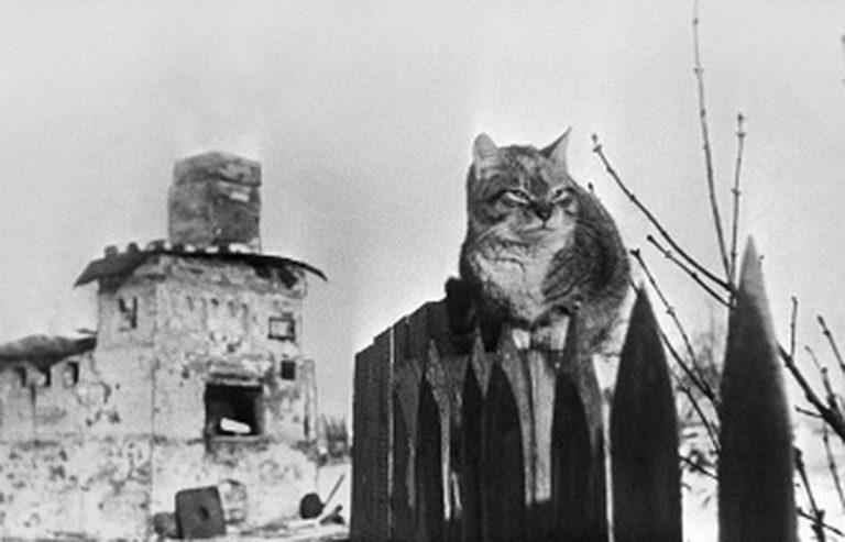 Зачем в Ленинград завезли несколько эшелонов кошек в 1943 году