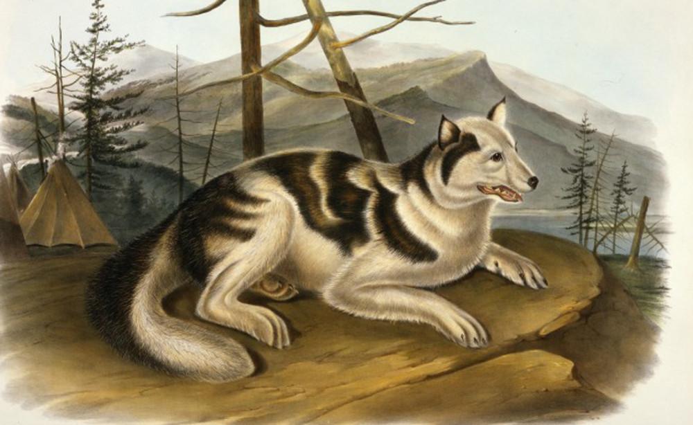 Исчезнувшие  породы собак