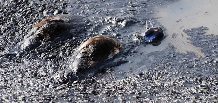 В Мексиканский залив уже 14 лет непрерывно вытекает нефть. Заметили это только сейчас