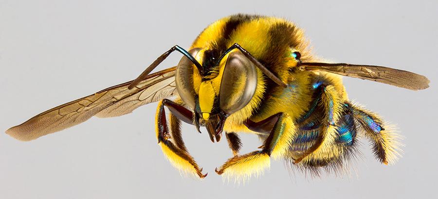 Пчелы. Задача
