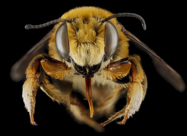 Нет пчел – нет опыления – нет еды – нет человека