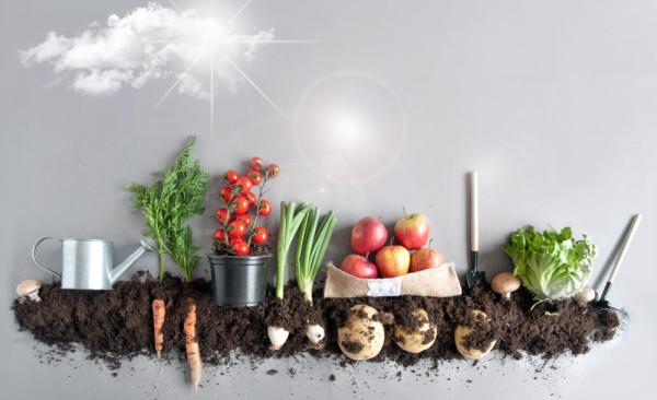 ООН предупредила об угрозе глобального продовольственного кризиса