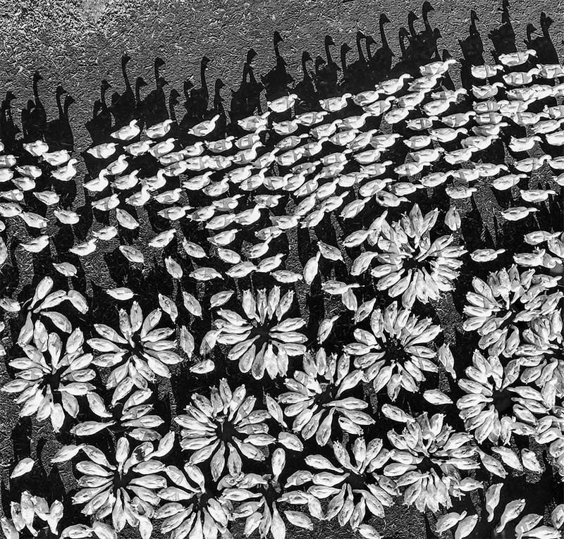 Головокружительно красивые фото, сделанные с помощью дронов