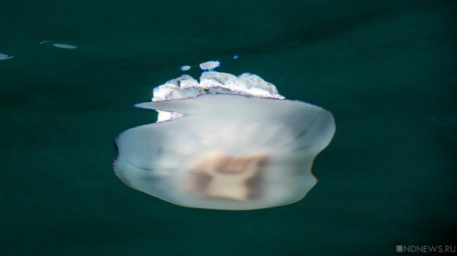 Российские ученые разработали сок из медузы