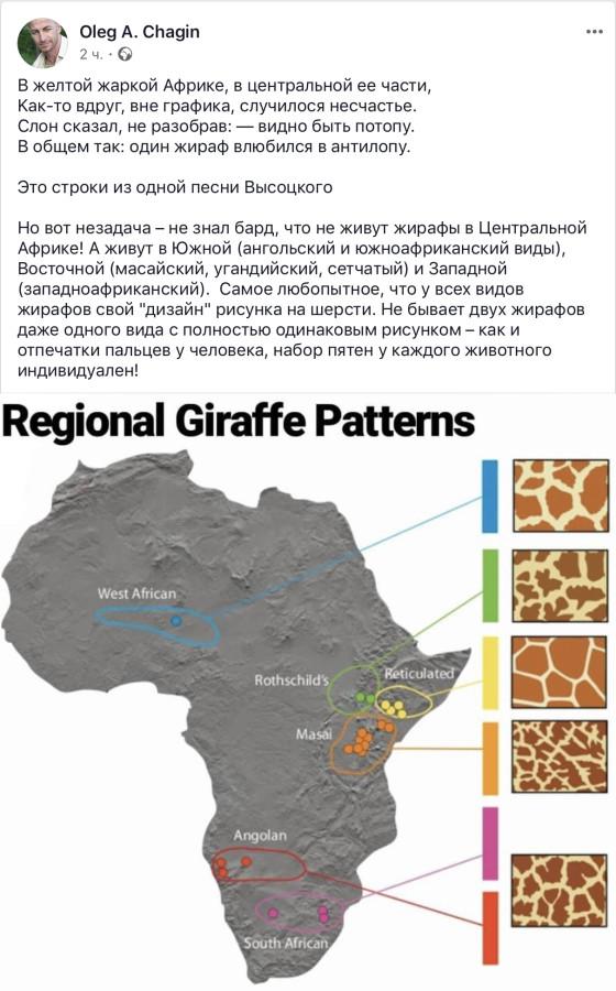 Про жирафов