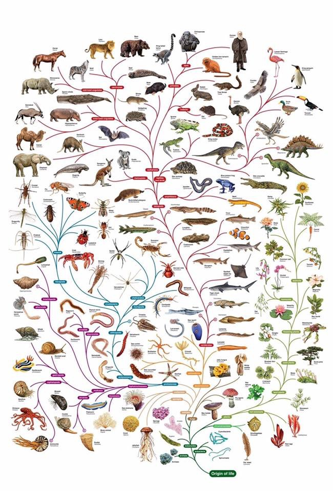 Эволюционное дерево жизни