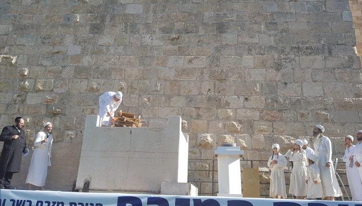 Впервые за 2000 лет ягненка Песаха могут принести в жертву на Храмовой горе