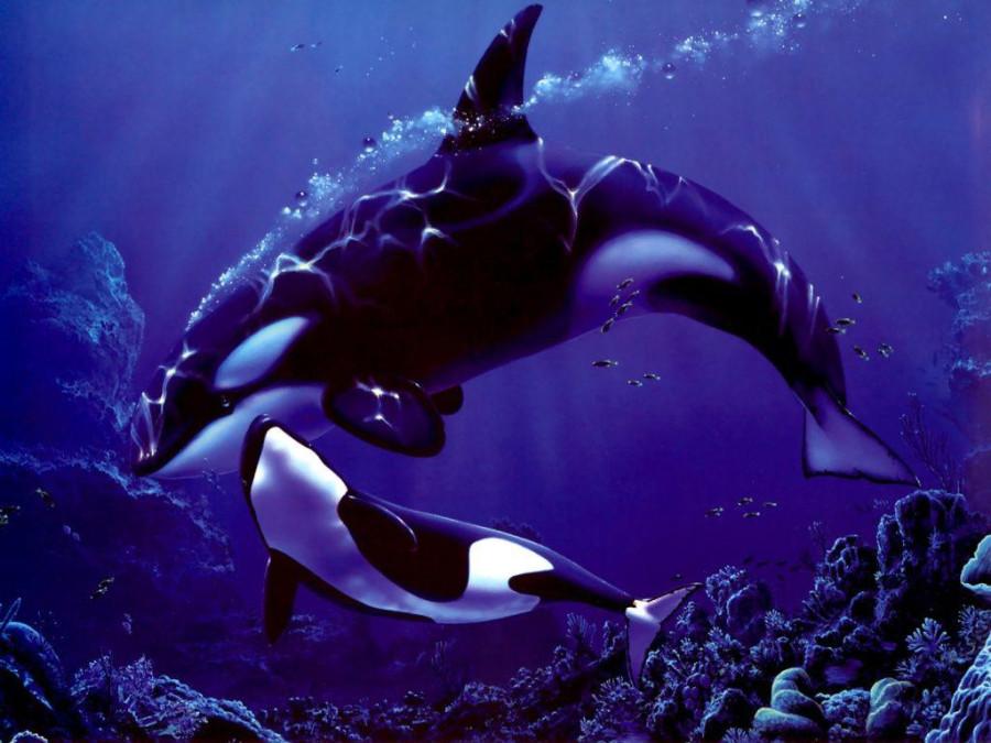 Касатки и киты  (2)