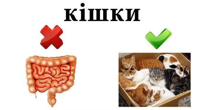 Spicyn_Kult_44_04