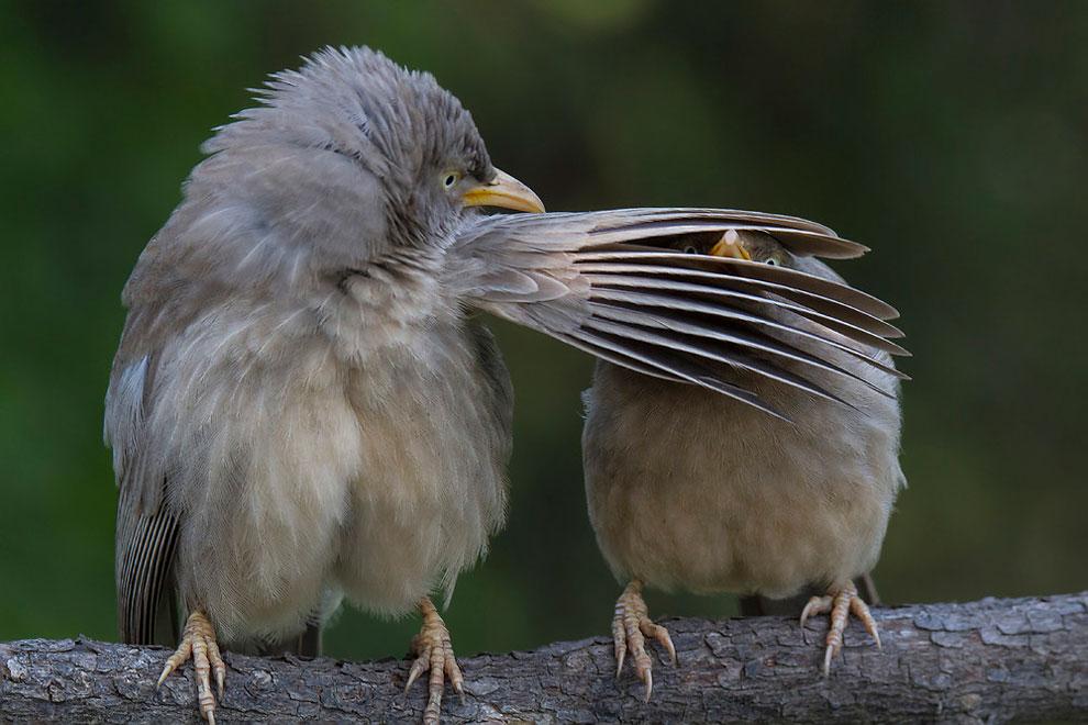 Лучшие работы конкурса самых смешных фотографий дикой природы