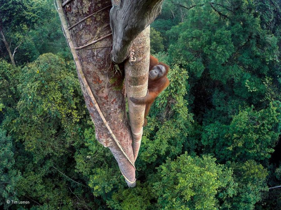 Победители ежегодного конкурса фотографий дикой природы