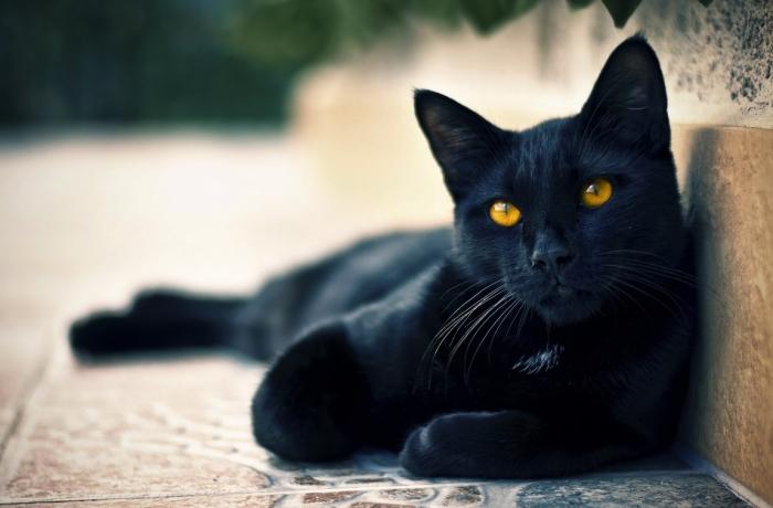 black_cat_0