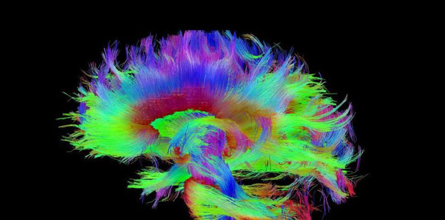 Гарвардские ученые нашли физический источник человеческого сознания