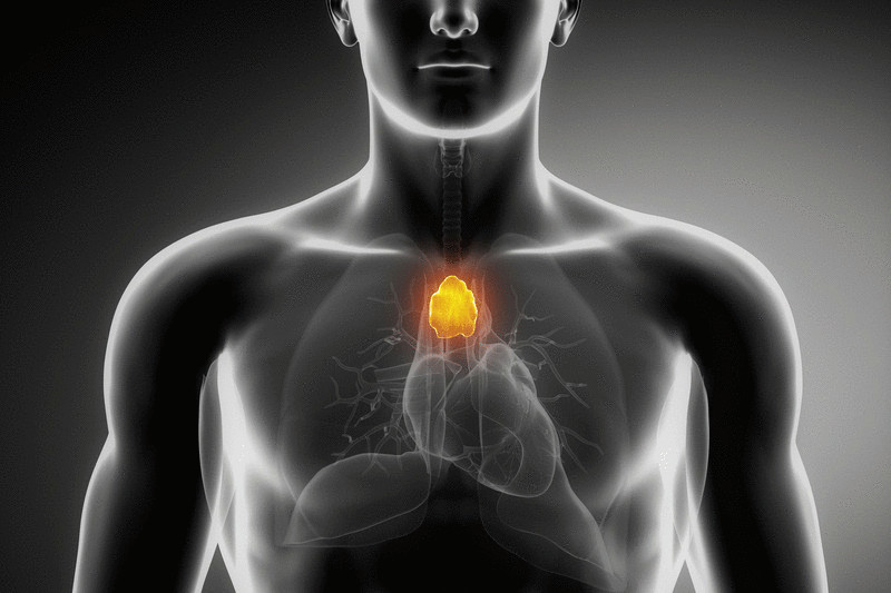 content_thymus_-_a_point_of_happiness_in_your_body
