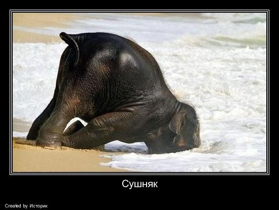 http://ic.pics.livejournal.com/matveychev_oleg/27303223/537506/537506_original.jpg
