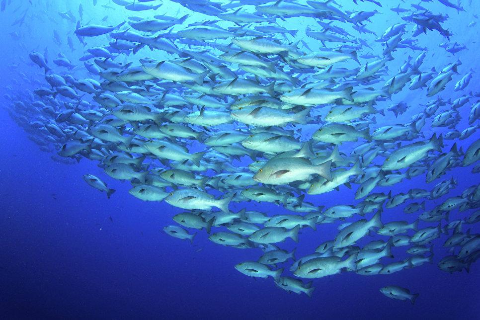 Биологи уличили рыб в наличии у них коллективного разума