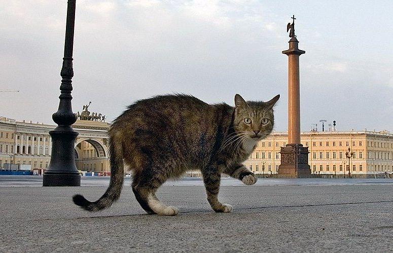 Эрмитажные коты