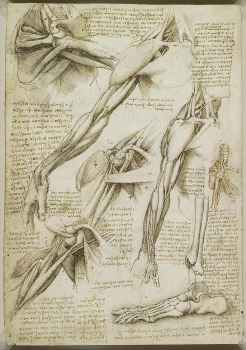 Leonardo-da-Vinchi11