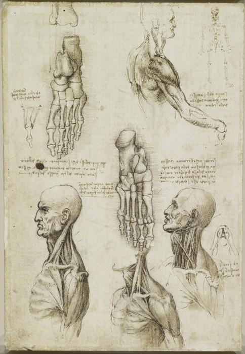 Leonardo-da-Vinchi20