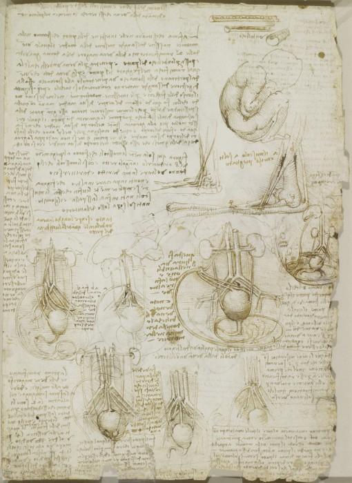 Leonardo-da-Vinchi23