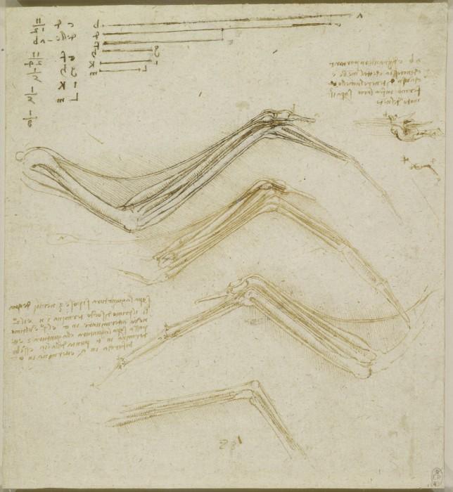 Leonardo-da-Vinchi24
