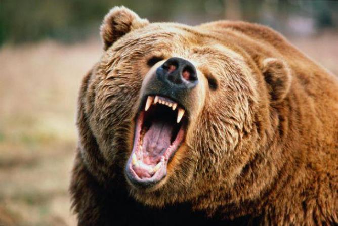 На Урале мужчина голыми руками отбился от медведя