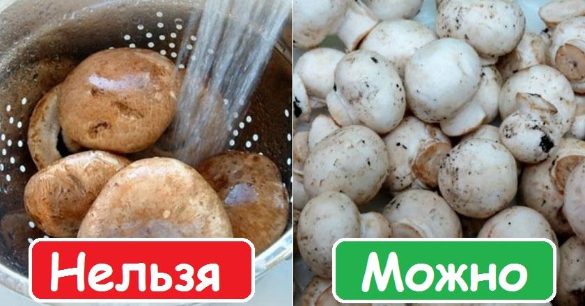 Польза грибов