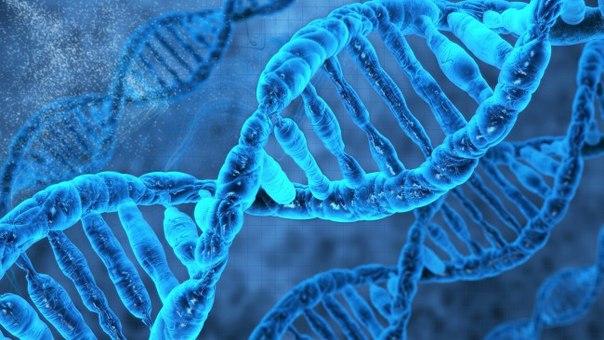 Генетики обнаружили «мутацию вегетарианцев»