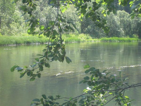 Нельзя в одну реку войти дважды автор