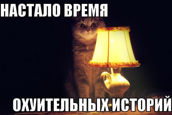 настало-время-охуительных-историй-история-одной-кошки--докторская---зло-песочница-721417