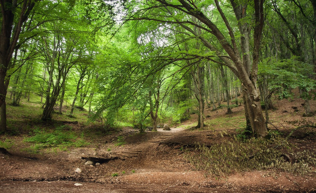 Крымский лес1