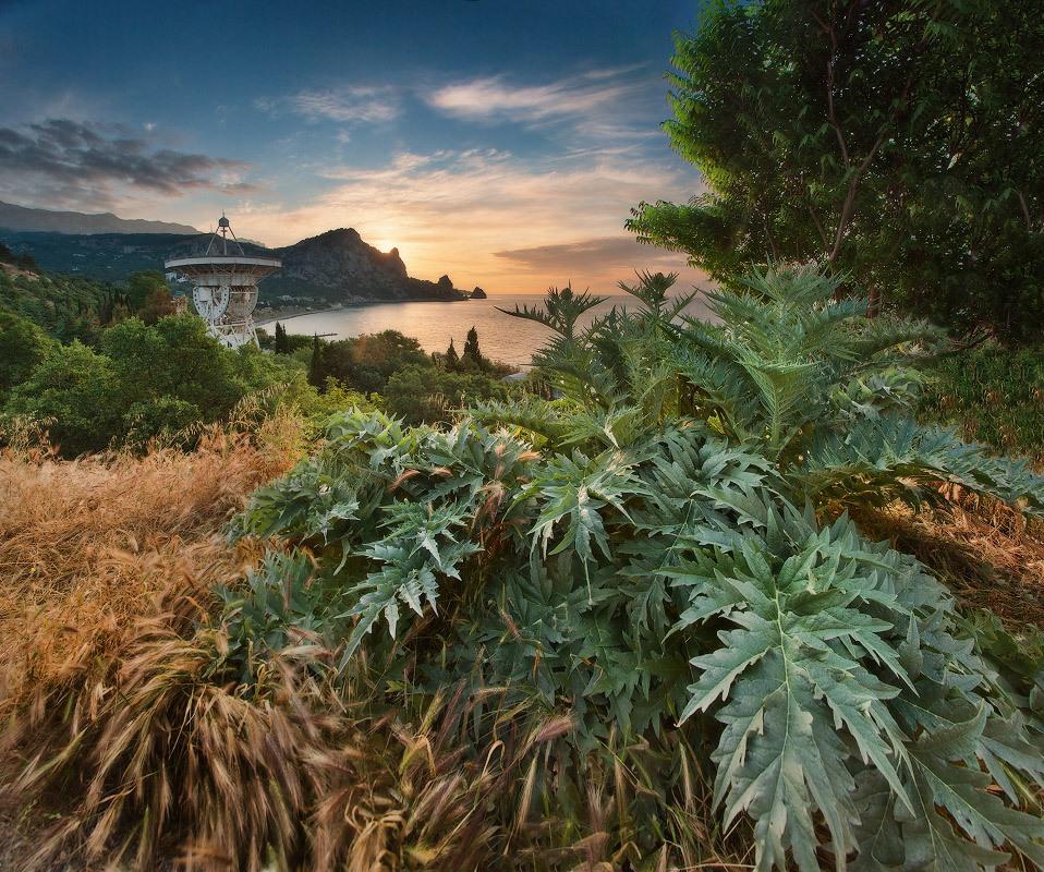 Про связь с иными мирами на фоне неизвестного кактуса и рассвета в Кацивели