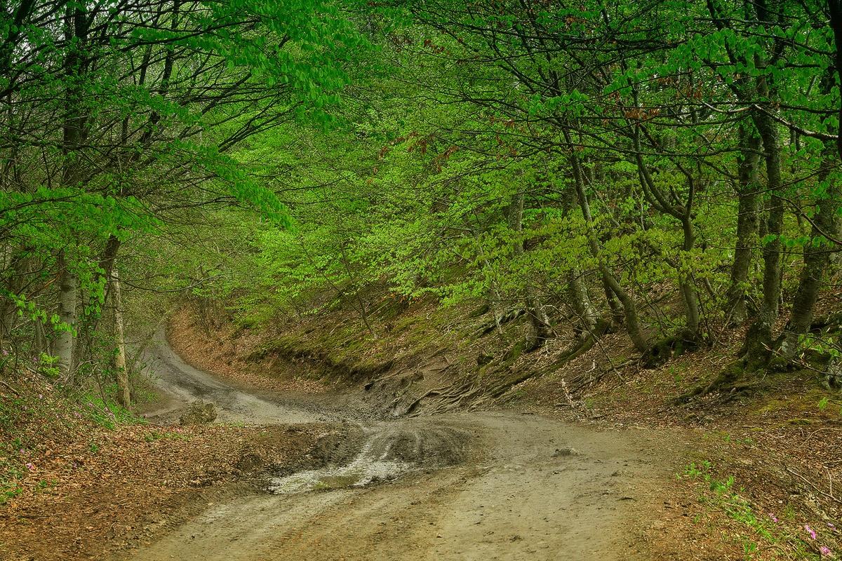 Про крымский лес1