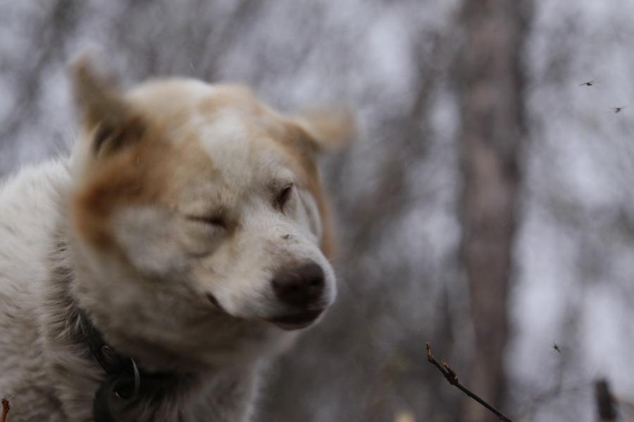 Охота на уток в Якутии видео