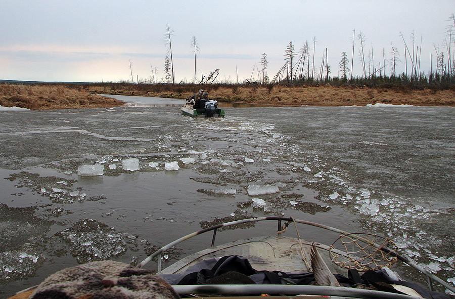 Охота в Якутии баянай