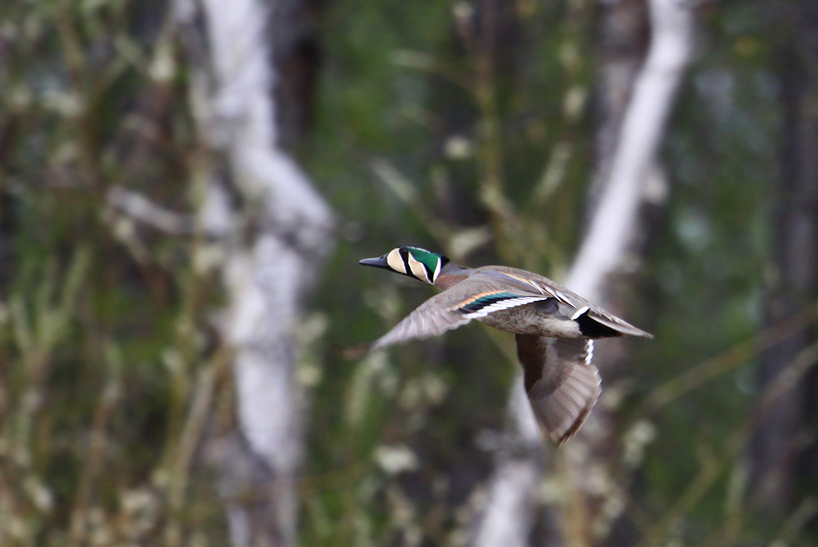 Фото охоты на уток