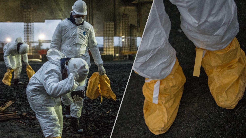 Что сейчас происходит в Чернобыле (фото).