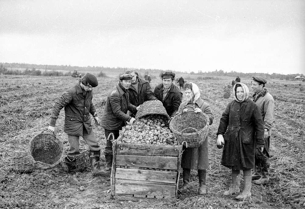 Трудовое рабство и гнилая капуста