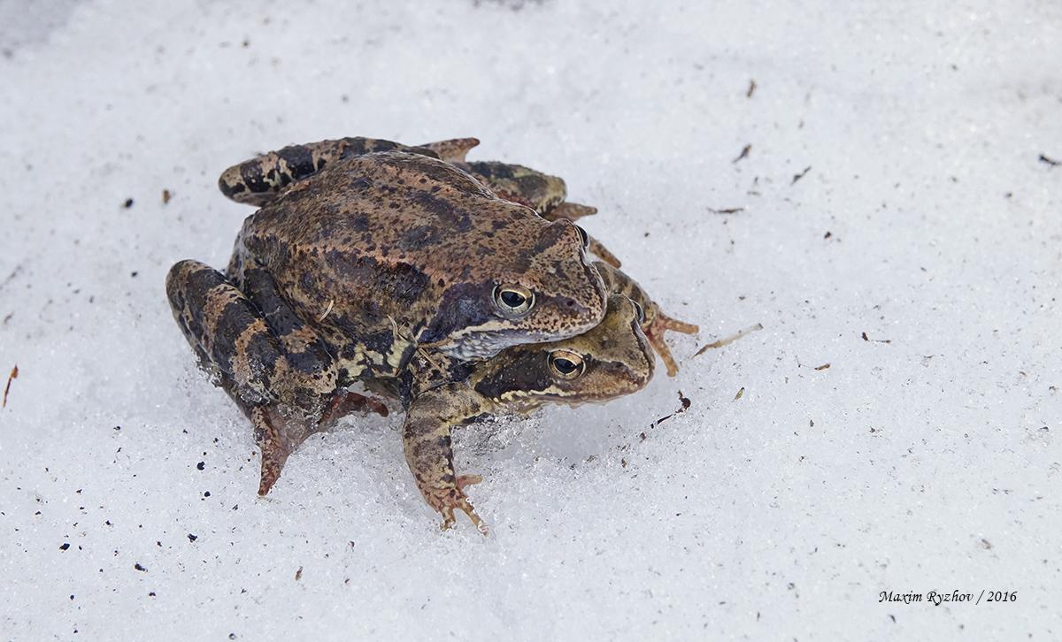 других фильмов картинка лягушка спит зимой храме явился