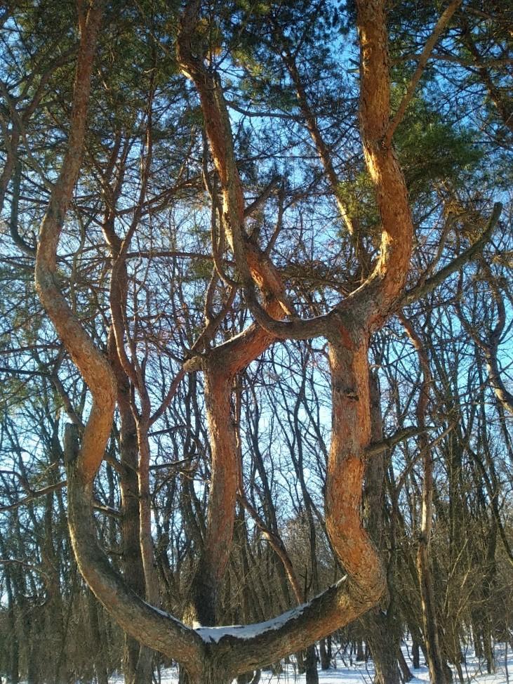 Дерево троица