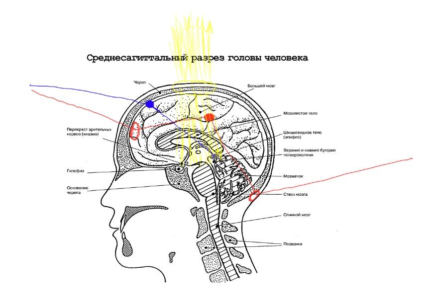 Виденье и телепатия2.jpg