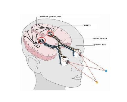 Виденье и телепатия1.jpg