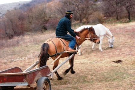 Может не все лошади лошади так